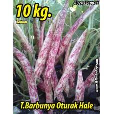 Barbunya Tohumu Oturak Hale - 10 KG