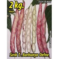 Barbunya Tohumu Sırık Defne - 2 KG