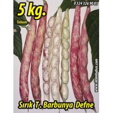 Barbunya Tohumu Sırık Defne - 5 KG