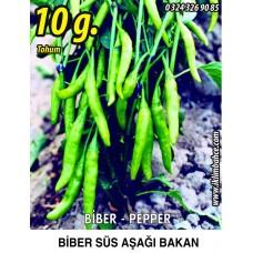 Biber Tohumu Aşağıbakan Yeşil Süs - 10g  (~ Takribi 800 Tohum)
