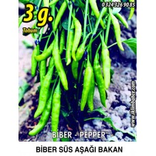 Biber Tohumu Aşağıbakan Yeşil Süs - 3 g  (~ Takribi 240 Tohum)