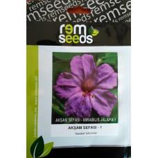 Akşam Sefası Çiçek Tohumu 1 - MIRABILIS JALAPA (~ Takribi 10 Tohum)