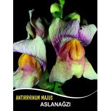 Aslanağzı Çiçek Tohumu - ANTIRRHINUM MAJUS (~ Takribi 50 Tohum)