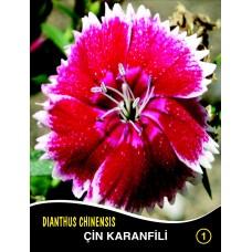 Çin Karanfili Çiçek Tohumu 1 - DIANTHUS CHINENSIS (~ Takribi 40 Tohum)