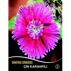 Çin Karanfili Çiçek Tohumu 2 - DIANTHUS CHINENSIS (~ Takribi 40 Tohum)