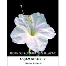 Akşam Sefası Çiçek Tohumu 2-MIRABILIS JALAPA (~ Takribi 10 Tohum)
