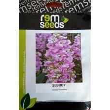 Şebboy Çiçek Tohumu 2 - MATTHIOLA INCANA (~ Takribi 50 Tohum)