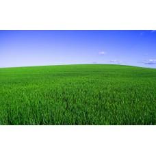 Çim Tohumu Karışımı Lüks 3M- 10 KG