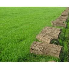 Çim Tohumu Karışımı Eko 3M - 10 KG