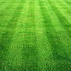 Çim Tohumu Karışımı Lüks 5M- 10 KG