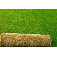 Çim Tohumu Karışımı Lüks 4M- 10 KG