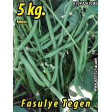 Fasulye Tohumu Tegen ( Oturak ) - 5 KG