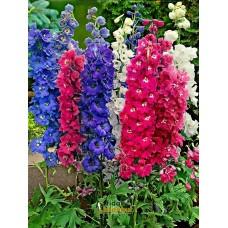 Hazeran Çiçek Tohumu- DELPHINIUM MIX (~ Takribi 30 Tohum)