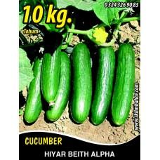 Hıyar Tohumu Salatalık Beith Alpha (Yerli) - 10 Kg