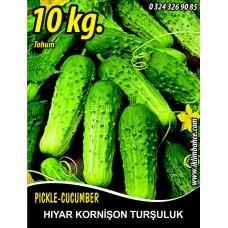 Hıyar Tohumu Salatalık Kornişon Turşuluk - 10 Kg