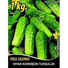 Hıyar Tohumu Salatalık Kornişon Turşuluk - 1 Kg
