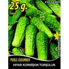 Hıyar Tohumu Salatalık Kornişon Turşuluk - 25 g  (~ Takribi 500 Tohum)