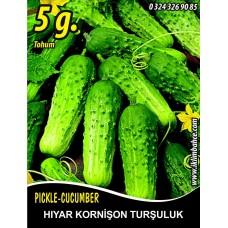 Hıyar Tohumu Salatalık Kornişon Turşuluk - 5 g  (~ Takribi 100 Tohum)