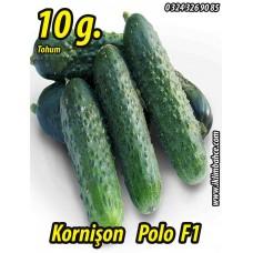 Hıyar Tohumu Salatalık Kornişon Turşuluk Hibrit Polo F1 - 10 g  (~ Takribi 200 Tohum)