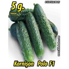 Hıyar Tohumu Salatalık Kornişon Turşuluk Hibrit Polo F1 - 5 g  (~ Takribi 100 Tohum)