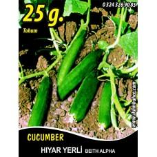 Hıyar Tohumu Salatalık Yerli - 25 g.  (~ Takribi 500 Tohum)