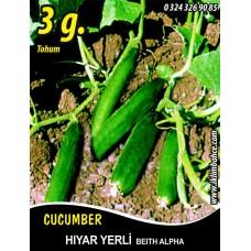 Hıyar Tohumu Salatalık Yerli - 3 g  (~ Takribi 90 Tohum)