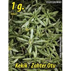 Kekik Tohumu Zahter Satureja hortensis L - 1 g. (~ Takribi 250 Tohum)