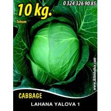 Lahana Tohumu Yalova 1 (Beyaz) - 10 KG