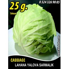 Lahana Tohumu Yalova Sarmalık (Beyaz) - 25g (~ Takribi 3250 Tohum)