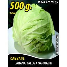 Lahana Tohumu Yalova Sarmalık (Beyaz) - 500 g