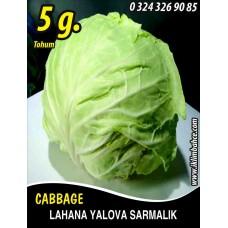 Lahana Tohumu Yalova Sarmalık (Beyaz) - 5 g (~ Takribi 650 Tohum)