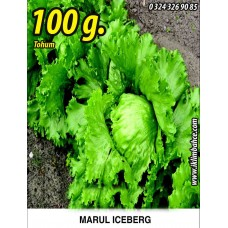 Marul Tohumu Iceberg - 100 g.