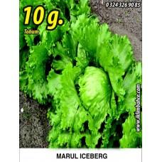 Marul Tohumu Iceberg - 10g. (~ Takribi 5500 Tohum)