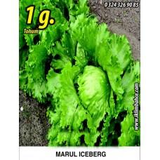 Marul Tohumu Iceberg - 1 g. (~ Takribi 550 Tohum)
