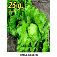 Marul Tohumu Iceberg - 25g. (~ Takribi 13750 Tohum)