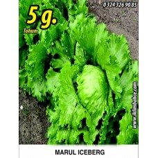 Marul Tohumu Iceberg - 5g. (~ Takribi 2750 Tohum)