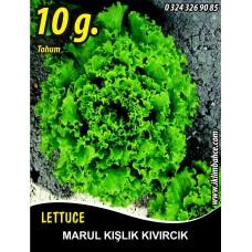 Marul Tohumu Kışlık Kıvırcık - 10g (~ Takribi 5500 Tohum)