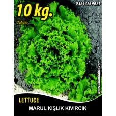 Marul Tohumu Kışlık Kıvırcık - 10 KG