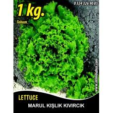 Marul Tohumu Kışlık Kıvırcık - 1 KG