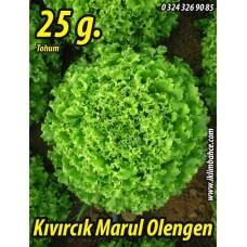 Marul Tohumu Olenga Pk 25 gr (~ Takribi 17500 Tohum)