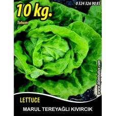 Marul Tohumu Tereyağlı Kıvırcık 10 kg.
