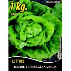 Marul Tohumu Tereyağlı Kıvırcık 1 kg.