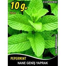 Nane Tohumu Geniş Yaprak - 10 g  (~ Takribi 60.000 Tohum)