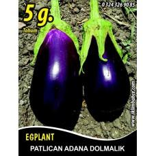 Patlıcan Tohumu Adana Dolmalık - 5 g (~ Takribi 650 Tohum)