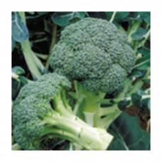 Seminis Brokoli  HERITAGE 100-110 Günlük 2500 Tohum