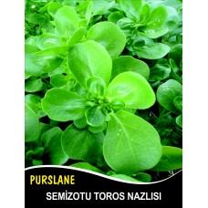 Semizotu Tohumu Toros Nazlısı - 1Kg