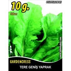 Tere Tohumu Toros Yeşili - 10 g (~ Takribi 2500 Tohum)