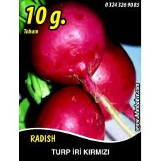 Turp Tohumu Toros Kırmızısı - 10 g (~ Takribi 600 Tohum)
