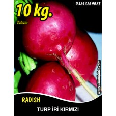 Turp Tohumu Toros Kırmızısı - 10 KG
