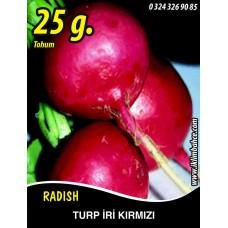 Turp Tohumu Toros Kırmızısı - 25g (~ Takribi 1500 Tohum)
